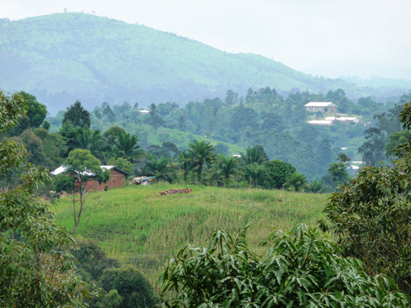 Cameroon hill farm